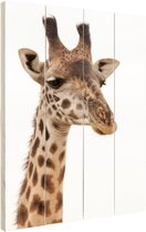 Portret van een giraffe Hout 60x80 cm - Foto print op Hout (Wanddecoratie)