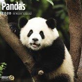 Panda Kalender 2020