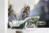 Fotobehang vinyl - Ruigpootuil in een besneeuwde boom breedte 390 cm x hoogte 260 cm - Foto print op behang (in 7 formaten beschikbaar)