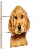 Close-up van een puppy Hout 160x120 cm - Foto print op Hout (Wanddecoratie) XXL / Groot formaat!