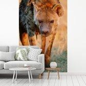 Fotobehang vinyl - Hyena loopt op een vlakte tijdens zonsondergang breedte 270 cm x hoogte 400 cm - Foto print op behang (in 7 formaten beschikbaar)