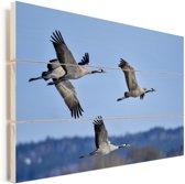 Europese kraanvogels vliegen over landschap Vurenhout met planken 120x80 cm - Foto print op Hout (Wanddecoratie)