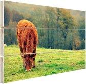 Koe in de herfst Hout 80x60 cm - Foto print op Hout (Wanddecoratie)