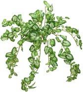 Europalms kunstplant - Nephthytis struik - 50 cm