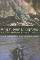 Amphibians, Reptiles, and Their Habitats at Sabino Canyon
