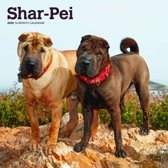Shar Pei Honden Kalender 2020