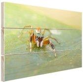 Kleurrijke springspin Hout 60x40 cm - Foto print op Hout (Wanddecoratie)