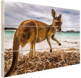 Wallaby op het strand Hout 120x80 cm - Foto print op Hout (Wanddecoratie)