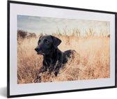 Foto in lijst - Een Labrador Retriever ligt in het hoge gras fotolijst zwart met witte passe-partout 60x40 cm - Poster in lijst (Wanddecoratie woonkamer / slaapkamer)