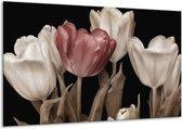 Glasschilderij Tulpen   Bruin, Wit, Zwart   120x70cm 1Luik   Foto print op Glas    F002480