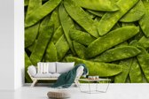 Fotobehang vinyl - Stapel van natte groene erwten in peulen breedte 360 cm x hoogte 240 cm - Foto print op behang (in 7 formaten beschikbaar)