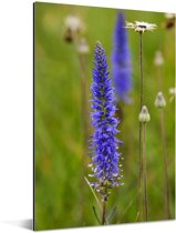 Paarse bloemen van de lange ereprijs Aluminium 120x180 cm - Foto print op Aluminium (metaal wanddecoratie) XXL / Groot formaat!