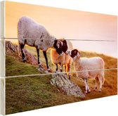 Drie schapen bij zonsopkomst Hout 160x120 cm - Foto print op Hout (Wanddecoratie) XXL / Groot formaat!