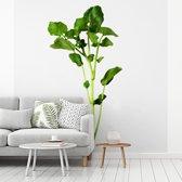 Fotobehang vinyl - Close up van  enkelvoudige witte waterkers plant breedte 240 cm x hoogte 240 cm - Foto print op behang (in 7 formaten beschikbaar)
