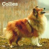 Collies Kalender 2020