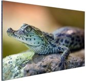 Baby krokodil Aluminium 120x80 cm - Foto print op Aluminium (metaal wanddecoratie)