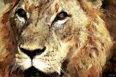 Leeuw in geschilderde olieverf look, bruin | dieren, sfeer, modern | Foto schilderij print op Canvas (canvas wanddecoratie) | 60x40cm