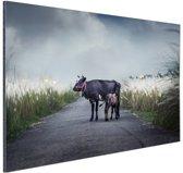 Koe met kalf Aluminium 90x60 cm - Foto print op Aluminium (metaal wanddecoratie)