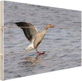 Grijze gans in het water Hout 80x60 cm - Foto print op Hout (Wanddecoratie)