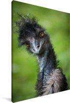 Een emoe kijkt recht in de camera Canvas 40x60 cm - Foto print op Canvas schilderij (Wanddecoratie woonkamer / slaapkamer)