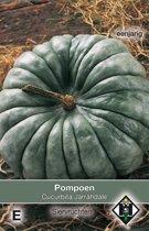 Van Hemert & Co Pompoen Jarrahdale (Cucurbita maxima)