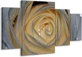 Canvas schilderij Roos | Wit, Geel, Grijs | 160x90cm 4Luik