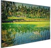 Rijstvelden en palmbomen in Azie Aluminium 60x40 cm - Foto print op Aluminium (metaal wanddecoratie)