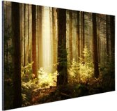 FotoCadeau.nl - Bos met zonnestralen Aluminium 90x60 cm - Foto print op Aluminium (metaal wanddecoratie)