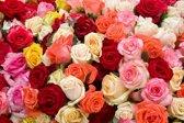 Papermoon Roses Vlies Fotobehang 500x280cm 10-Banen