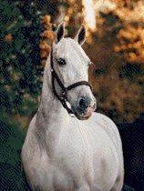 MyHobby Borduurpakket – Paard 30×40 cm - Aida 5,5 steken/cm - 100% katoen