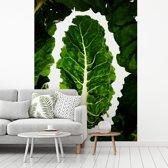 Fotobehang vinyl - Donkergroene snijbieten tegen een witte achtergrond breedte 295 cm x hoogte 400 cm - Foto print op behang (in 7 formaten beschikbaar)