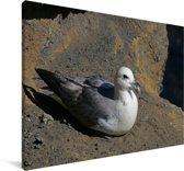 Noordse stormvogel op een rots Canvas 90x60 cm - Foto print op Canvas schilderij (Wanddecoratie woonkamer / slaapkamer)
