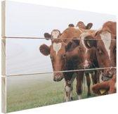 Groep nieuwsgierige koeien Hout 60x40 cm - Foto print op Hout (Wanddecoratie)