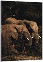 Plexiglas –Twee Olifanten – 40x60cm Foto op (Wanddecoratie op Plexiglas)