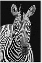 Canvas Schilderij Zebra