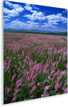 Alfalfagebied die in de zomer bloeien Plexiglas 60x90 cm - Foto print op Glas (Plexiglas wanddecoratie)