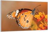Plexiglas –Oranje Vlinder– 120x80 (Wanddecoratie van Plexiglas)