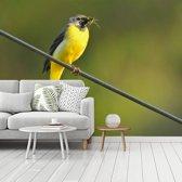 Fotobehang vinyl - Een gele kwikstaart genesteld op een ijzeren draad breedte 360 cm x hoogte 270 cm - Foto print op behang (in 7 formaten beschikbaar)