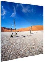 Oude bomen in de woestijn Glas 50x50 cm - Foto print op Glas (Plexiglas wanddecoratie)