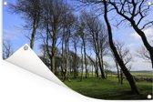 Hoge bomen op het platteland van het Engelse Nationaal park South Downs Tuinposter 60x40 cm - klein - Tuindoek / Buitencanvas / Schilderijen voor buiten (tuin decoratie)