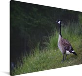 Een Canadese gans staande aan het water Canvas 180x120 cm - Foto print op Canvas schilderij (Wanddecoratie woonkamer / slaapkamer) XXL / Groot formaat!