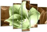 Glasschilderij Bloem | Groen, Bruin | 170x100cm 5Luik | Foto print op Glas |  F004553