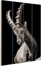 Zwart-wit geitenfoto Hout 40x60 cm - Foto print op Hout (Wanddecoratie)