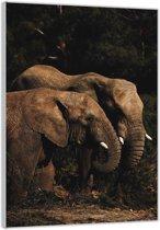 Plexiglas –Twee Olifanten – 60x90cm  (Wanddecoratie op Plexiglas)