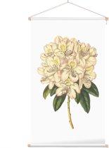 Textielposter Botanisch Rododendron Aquarel 2 (Rhododendron) - 40 x 70 cm