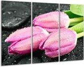 Glasschilderij Tulpen | Roze, Zwart | 120x80cm 3Luik | Foto print op Glas |  F005787