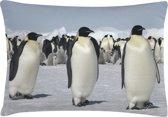 Bloomingville Sierkussen Pinguins - 70x35 cm