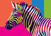 Schilder op Nummer Regenboog Zebra afm: 16,5x13 cm