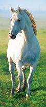 Fotobehang - White Horse - Deurposter - 200 x 86 cm - Multi