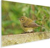 Een tjiftjaf op een houten hek Plexiglas 90x60 cm - Foto print op Glas (Plexiglas wanddecoratie)